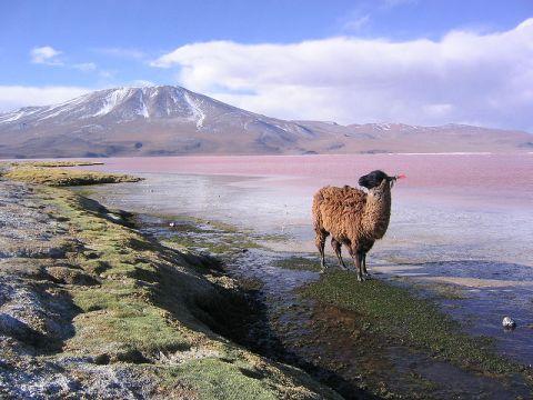 Boliv